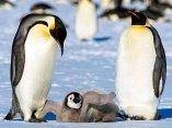 ecologia-pinguinos-antartida