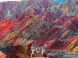 cebra-colores-naturaleza