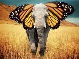 elefante-mariposa-naturaleza