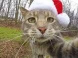 gato-que-se-hace-fotos-el-mismo-10