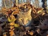 gato-que-se-hace-fotos-el-mismo-2