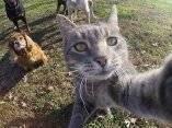 gato-que-se-hace-fotos-el-mismo-4