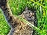 gato-que-se-hace-fotos-el-mismo-6