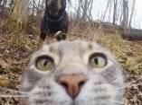 gato-que-se-hace-fotos-el-mismo