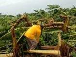 Áreas agrícolas de la Cooperativa Producción Agropecuaria, próximas a la Playa Rancho Luna perdieron sus plantaciones