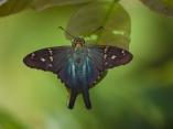exc-ag18-19-mariposa-dmgo-18-ag-19-escambray-ok