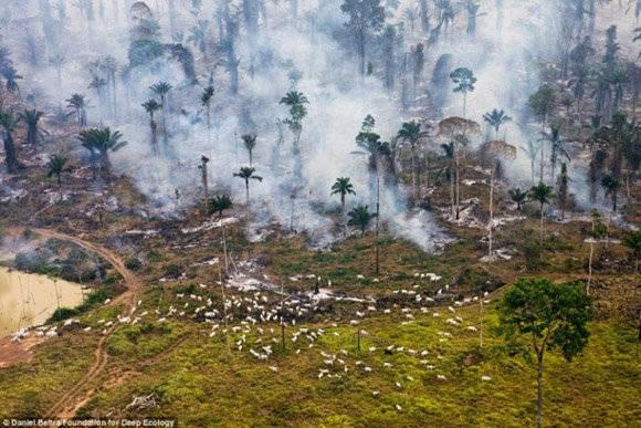Impactantes imágenes que muestran la destrucción provocada por la