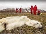 este-oso-polar-murio-de-hambre-en-svalvard-noruega-la-desaparicion-de-las-capas-de-hielo-estan-robando-a-los-osos-polares-de-tanto-en-su-espacio-de-vida-y-la-alimentacion