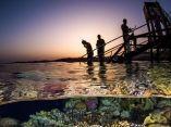 arrecife-premio-fotografia-acuatica