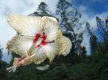 flower-power-premio-fotografia-acuatica