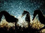 seahorse-premio-fotografia-acuatica