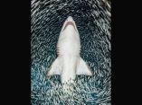 tiburon-premio-fotografia-submarina