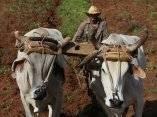 Campesino en  Valle de Viñales, Pinar del Rio. Foto: Ismael Francisco/Cubadebate.
