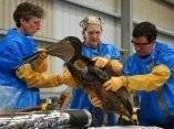 Protección de la fauna del Golfo de México