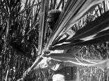 fidel-castro-cortando-cana-5-marzo-1961.jpg