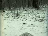 Ucrania, el genocidio de Babi Yar