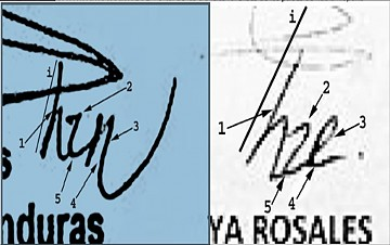 """Izquierda: Elementos estructurales: i) inclinación promedio o convencional en la escritura; 1) Ejecución curvilínea; 2) Cambio de dirección anguloso; 3) Presión marcada; 4) Ejecución de """"r"""" abierta en la parte inferior; 5) Ejecución curvilínea; Derecha: i) Inclinación más marcada hacia la derecha; 1) Ejecución rectilínea; 2) Cambio de dirección curvilíneo; 3) Posible presión leve o invertida en trazo descendente; 4) Ejecución de """"r"""" cerrada en la parte inferior que le da legibilidad como si fuera una """"E""""; 5) Ejecución angulosa. (Gráfica: Raymond Orta)"""