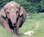 El elefante y el perrito, amigos diferentes.