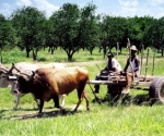 agricultura-organica-cuba