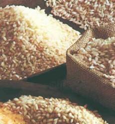 ia-panorama-del-arroz2