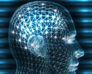 El cerebro humano no está completamente maduro hasta cumplir los 30 o 40 años