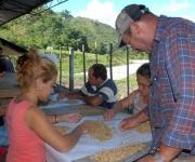Trabajadores de la planta de beneficio del café en Jibacoa, laboran en la escogida del grano de alta calidad, para la siembra de las posturas.