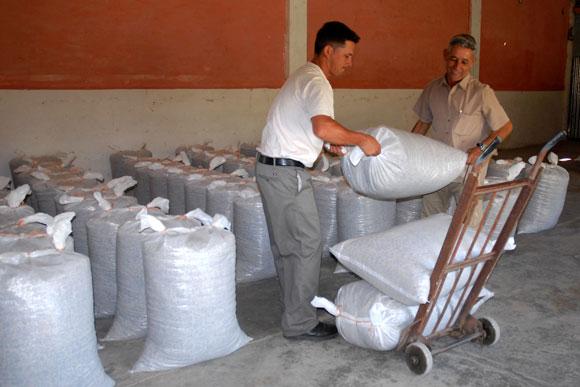 Trabajadores de la planta de beneficio del café en Jibacoa, laboran con la producción terminada del grano en el municipio de Manicaragua. (AIN)