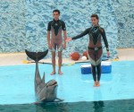 Espectáculo con Delfines en el Acuario Nacional de Cuba