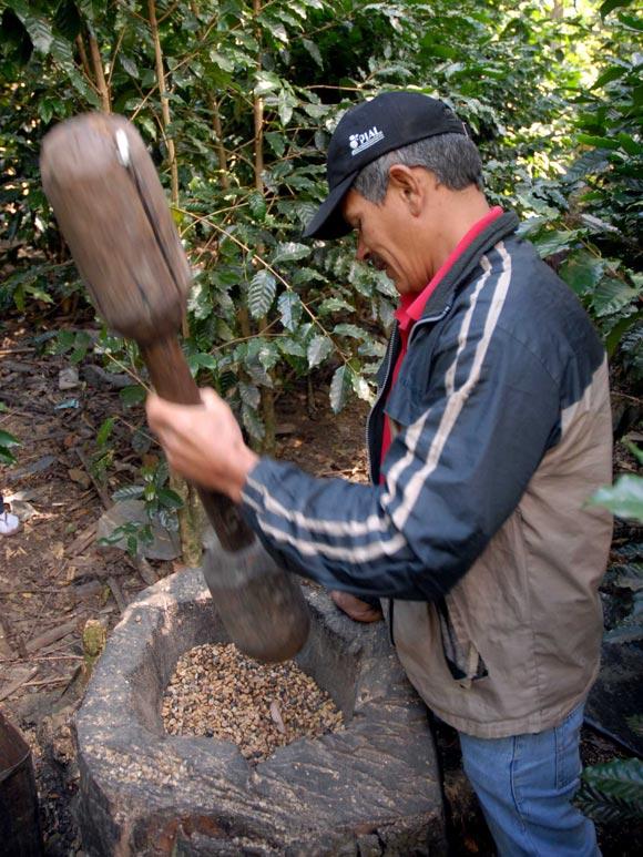 Forma tradicional de pilar el café por los habitantes de la montaña