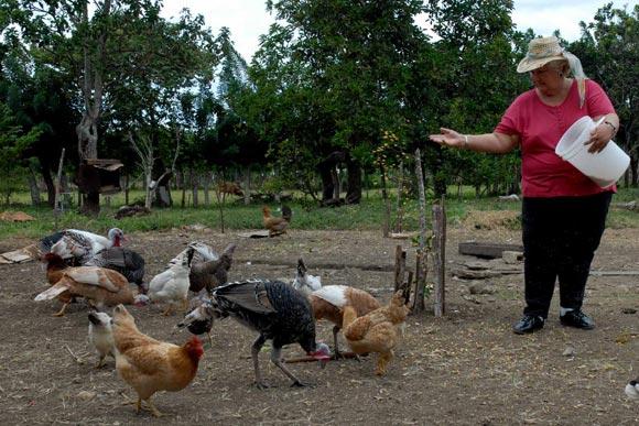 Campesina de zona rural, alimenta la cría de aves de su patio