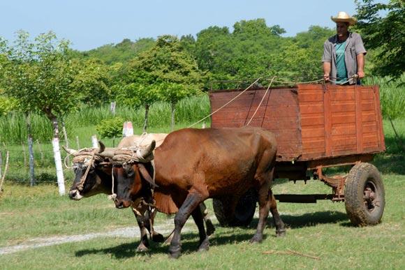 Medio de transporté comúnmente utilizado por los habitantes de las zonas rurales