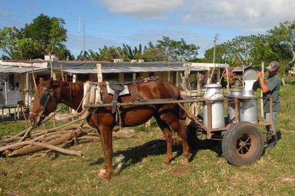 Recolector de leche con tracción animal