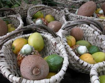 Agricultura cubana experimenta incrementos en cultivos frutales