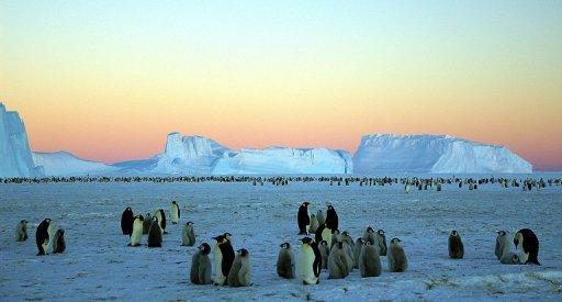 El avión fue encontrado enterrado en el hielo antártico. Foto: AFP