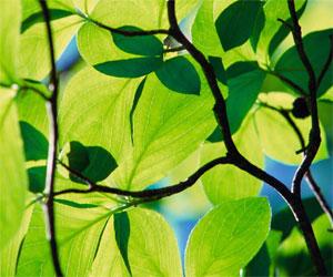 Naturaleza, plantas