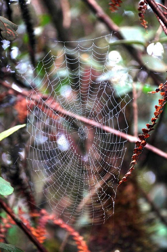 Una tela de araña en medio de la maravillosa vegetación de la Sierra Maestra. Foto: Kaloian