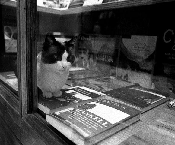 Gato acomodado sobre libros