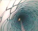 """Fotografía cedida hoy, martes 16 de marzo de 2010, por la Agencia Espacial Estadounidense, NASA, en la que se puede ver un """"Lyssianasid amphipod"""", una criatura parecida a un camarón o gamba, y de unos ocho centímetros tamaño, que fue hallado a casi 200 metros bajo la capa de hielo de la Antártida, en plena oscuridad, un descubrimiento que altera las teorías sobre las condiciones en las que puede desarrollarse la vida. Hasta ahora los científicos creían que sólo unos cuantos microbios eran capaces de vivir en estas condiciones. El descubrimiento de la NASA podría llevar a realizar expediciones en busca de vida a lugares hasta ahora descartados en el espacio, como planetas o lunas congeladas. EFE/"""