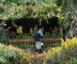 """""""Cuba in Flower"""" (Cuba en Flor), replica el Orquidiario de Soroa en el Jardín Botánico del Bronx, en Nueva York."""