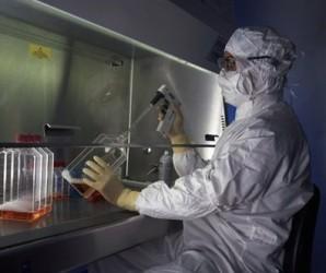Prueba Cuba efecto antitumoral en veneno de escorpión