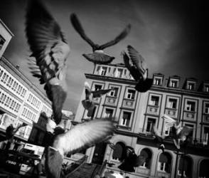 palomas_volando-paris