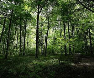 Científicos: La naturaleza no puede autoajustarse contra el cambio climático