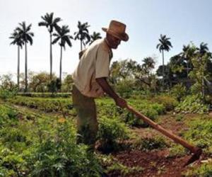 campesino-cubano1