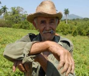 Cuba abre más de 1 100 tiendas de insumos para campesinos
