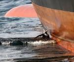 Peligran aves en el Golfo de México por derrame de Petróleo