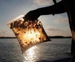 Derrame de Petróleo en el Golfo de México. Foto: Reuters