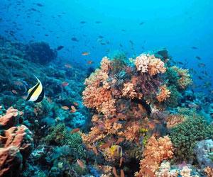 Evitar la pérdida de ecosistemas marinos puede salvar miles de vidas al año