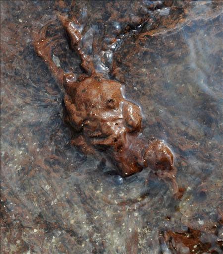 """Vista de un ave muerta cubierta por restos del vertido del pozo """"Deepwater Horizon"""" en Grand Terre Island, cerca de Grand Isle (Luisiana, golfo de México, Estados Unidos). Foto: EFE/Tannen Maury"""