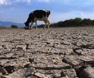 Aumentan a 12.4 millones afectados por sequía en Africa: ONU