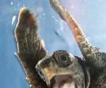 Tortuga marina se filma a sí misma